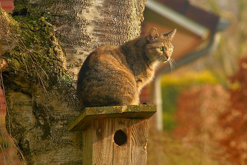 cat-2195538__340
