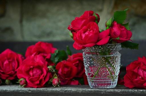 roses-821705__340