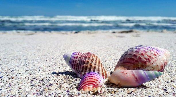 seashell-2821388__340